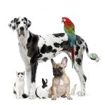 Group of pets - Dogcat bird reptile rabbit - in front of a white background